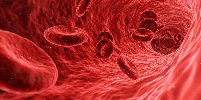Lidské buňky