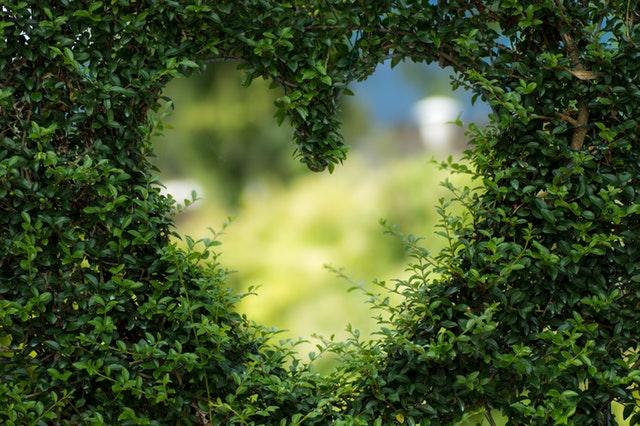 zelené srdce – díra v živém plotu