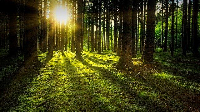 les se stromy a sluncem